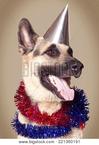 Funny Alsatian dog ready to celebrate a holiday