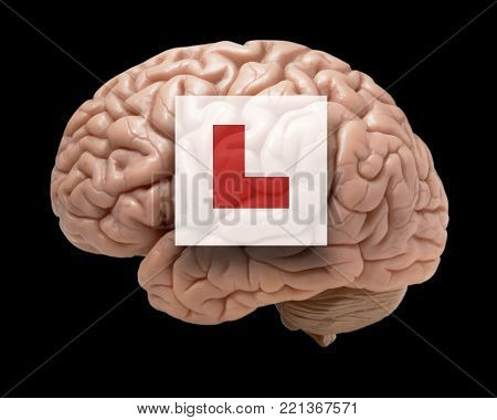 HUMAN BRAIN ON BLACK BACKGROUND WITH RED LEARNER L PLATE