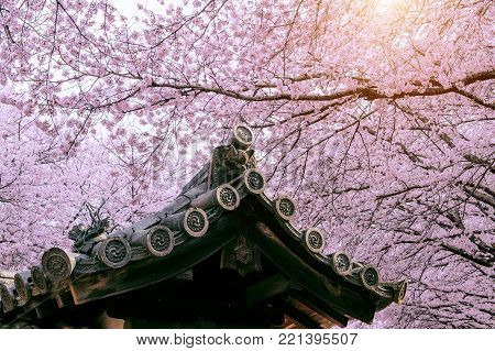 Cherry Blossom With Traditional Japanese Roof. Cherry Blossom In Spring, Japan.