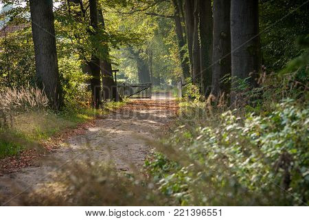 sandy path in autumn forest with sunbeams from the sunrise. Tree row interrupted with wooden fence and a distant perspective