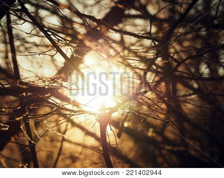 Sun shines through trees. Light goes through branches with no leaves. Autum