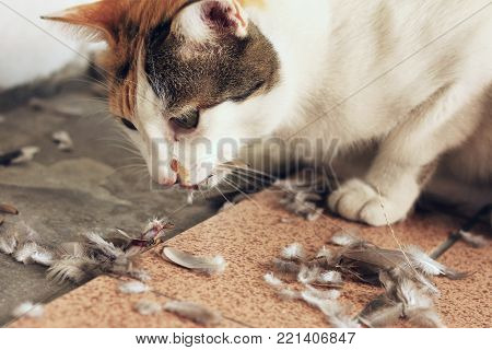 An Residential Cat Hunting and Eating Bird