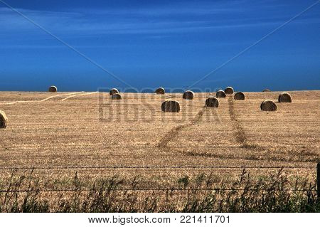 Wheat field with bales against bright blue sky