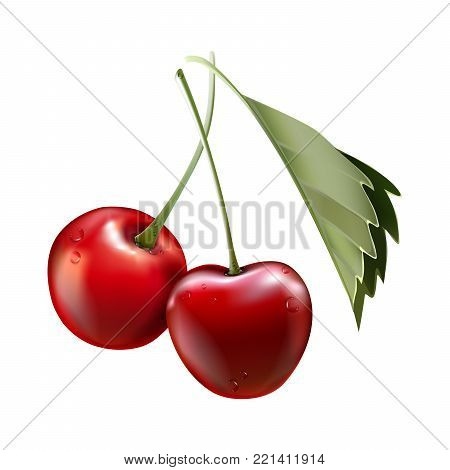 Red cherry. Two ripe berries with stalk. Realistic vector illustration with transparent shadows isolated on plaid background. Sweet fruits. 3d vector