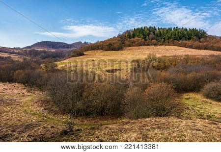 spruce forest on top of a hill in springtime. slopes without grass and plants without leaves. early beginning of a warm seasone