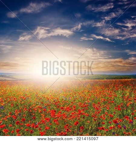 Poppy and flowers on the field. landscape. fantastic view of the sky over a colorful field of flowers. picturesque scene. breathtaking scenery. original creative images