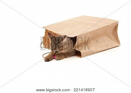 Picture of playful kitten with paper on its mouth isolated on white