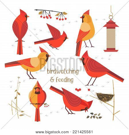 Birdwatching, bird feeding icon set. Red Northern cardinals pose comic flat cartoon. Birds straw nest, feeder, sunflower seeds. Minimalism simplicity design. Wildlife banner sign. Vector illustration poster