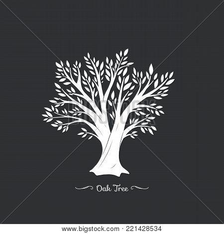 Oak tree. Nature. Vector silhouette illustration Organic food