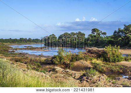 Swingwedzi river landscape in Kruger national park, South Africa
