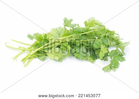 Coriandrum sativum leaves isolated on White Background. Coriandrum sativum is an important spice for Thai cooking.