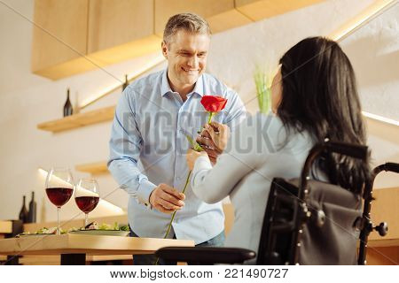 Flower of love. Attractive joyful well-built man smiling and giving a red flower to his beloved dark-haired handicapped woman while having romantic dinner