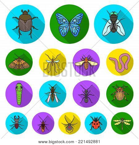 Different kinds of insects flat icons in set collection for design. Insect arthropod vector symbol stock  illustration.