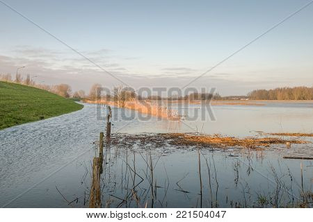 Flooded floodplain in the Netherlands due to the high water level of the river. Much rain and melt water from Germany flows into the Dutch rivers during the winter season.
