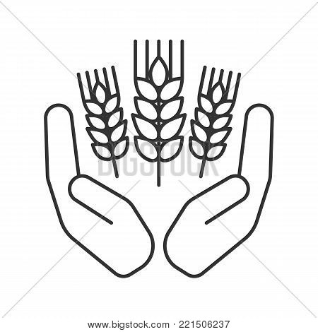 Open palms with wheat ears linear icon. Farming. Agriculture. Thin line illustration. Growing wheat. Contour symbol. Vector isolated outline drawing
