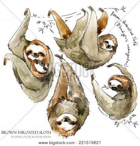 Hand draw Watercolor sloth illustration. tropical animal