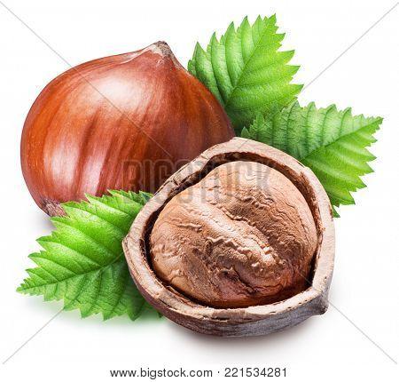 Ripe brown hazelnut and kernel of hazelnut. Clipping path.