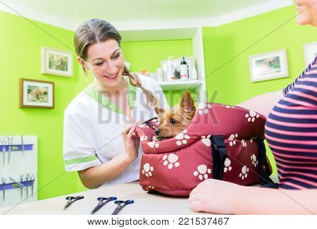 Woman brings cute little dog to dog parlour for grooming