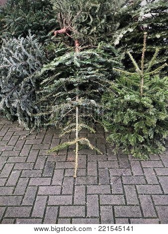 discarded christmas trees piled on pavement for garbage removal in Germany