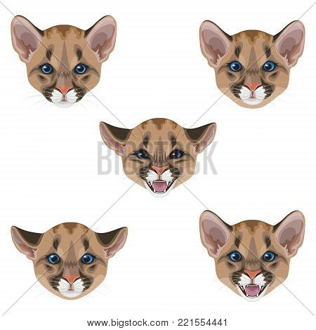 Little puma muzzle set.Young American mountain lion isolated on white. Funny animal facial expression. Cougar cub calm, angry, hissing vector flat illustration.