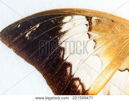 Butterfly Wing In Macro Closeup