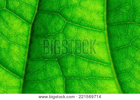 Green Leaf Veins Macro Closeup And Sky