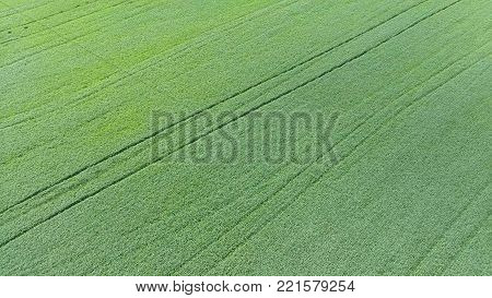 Texture of wheat field. Background of young green wheat on the field. Photo from the quadrocopter. Aerial photo of the wheat field.
