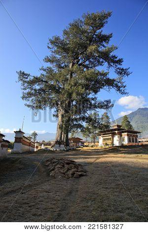 College for astrology – Druk Phodrangdhing Pangri Zamdong in Thimphu, Bhutan.