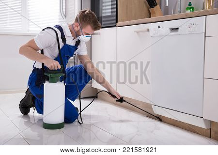Young Male Exterminator Worker Spraying Insecticide Chemical In Kitchen