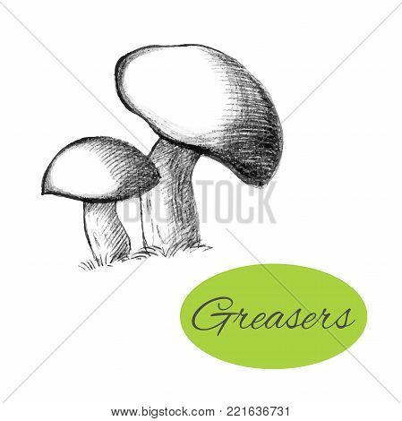 Sketch of greasers. Black hand drawn mushrooms on white background. Vector illustration