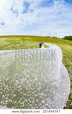 Beautiful couple newlyweds in a camomile field with very long bridal veil