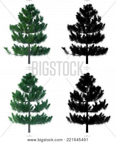 Fir trees with alpha chanal. Plain model texture for game design