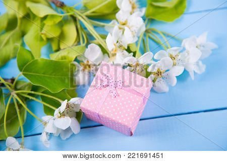Pink Gift Box Surrounded With Blooming White Apricot Branches On Blue Wooden Background