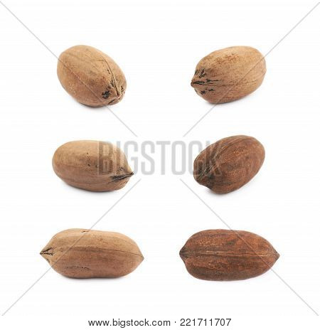 Single pecan nut isolated over the white background, set of six different foreshortenings