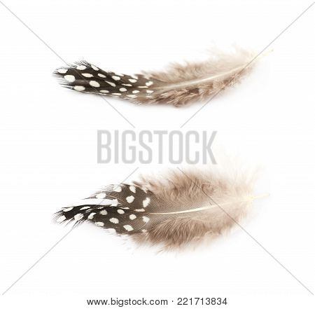 Decorational bird's feather isolated over the white background, set of two different foreshortenings
