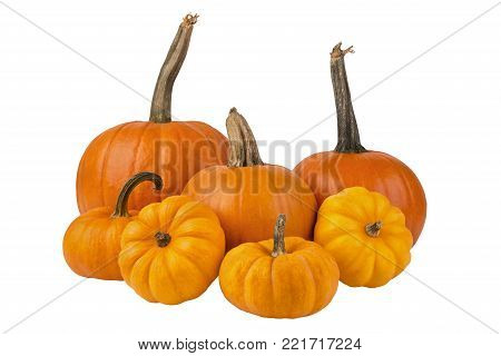 A group of different size pumpkins, isolated on white background.