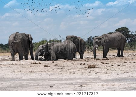 Elephant group at a waterhole in Chope National Park in Botswana