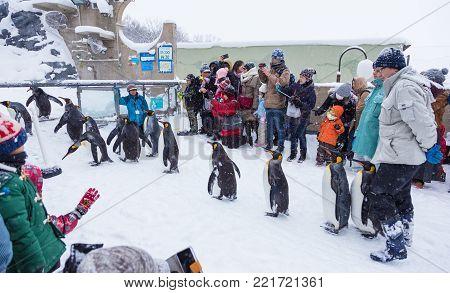 Hokkaido, Japan - 28 December 2017 - Zoo visitors watch penguin parade at Hokkaido Zoo, Azahiyama Zoo, in Hokkaido, Japan on December 28, 2017