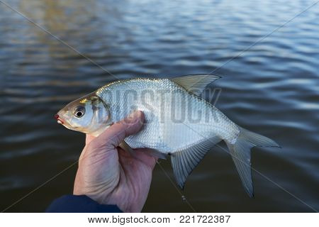 Bream in fisherman's hand, float fishing, copy space