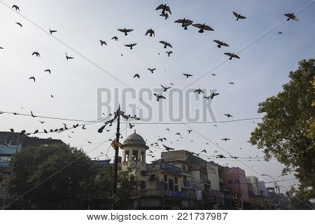 DELHI, INDIA - December 20 2014 : flock of pigeon fly at hall town in chandni chowk, this place is and famous aged place of delhi.