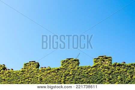 crenellated wall with chimneys, wall covered by climbing plant, ivy on wall and chimneys