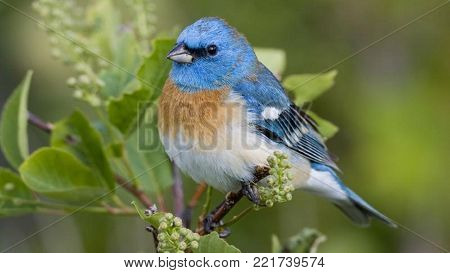 blue white and black color bird looking beautiful