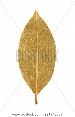 Dried bay leaf on white background. The Bay leaf tree on white background.