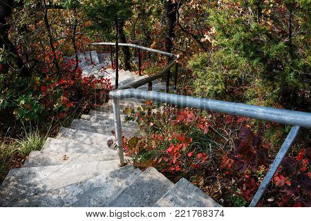 Stairs Lead Down Through The Forest.