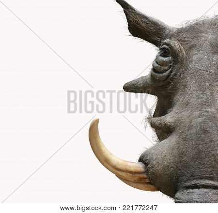 warthog portrait taxidermy objects isolated anmals theme