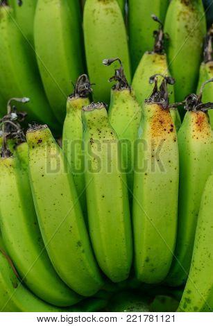 Young green banana on tree at plantation in Southern Vietnam.