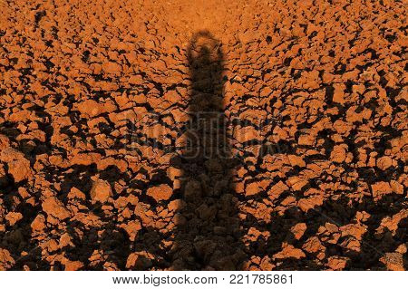 human shadow on soil lump in rice field before plant rice for brown background