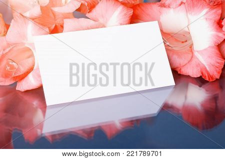 Flower spring background. Gladiolus spring flowers and white card with free space for text, spring flower still life with spring flowers of gladiolus. Spring background in soft tones