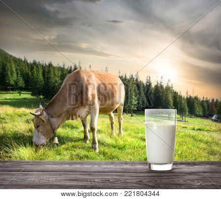 Glass of milk against background of beige cow on mountain pasture. The concept of natural food.