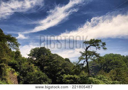 Da Hong Pao Cha or big red robe tea scenic area in Wuyishan scenic area of Fujian Province China.